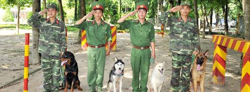 trung tâm huấn luyện chó Quân Cảnh TPHCM