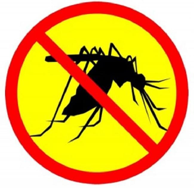 Công ty diệt muỗi tại TPHCM