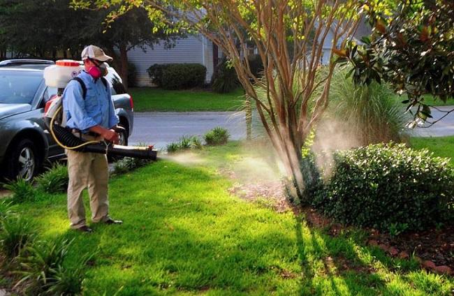 Đại Việt cung cấp dịch vụ phun thuốc diệt muỗi tại nhà TPHCM